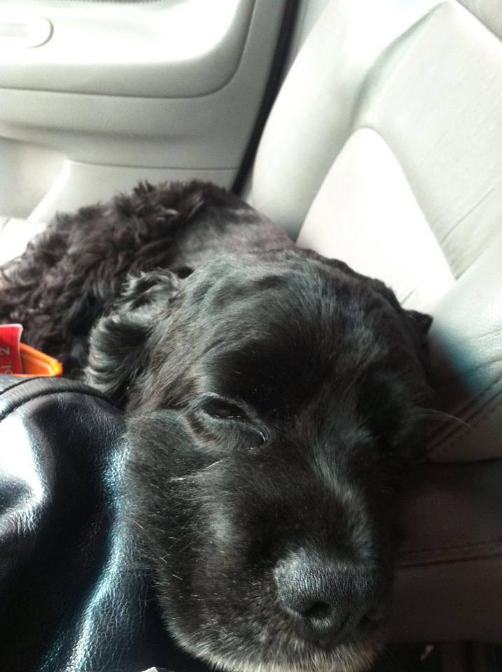 Sleepy ride home