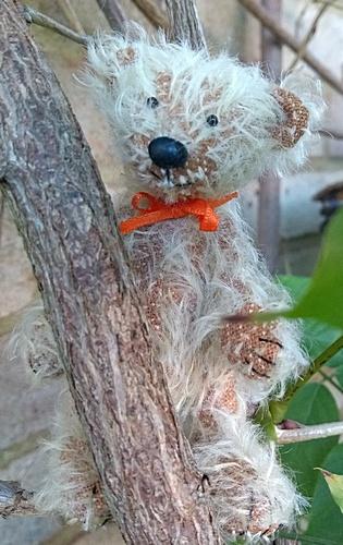 Finley in a tree