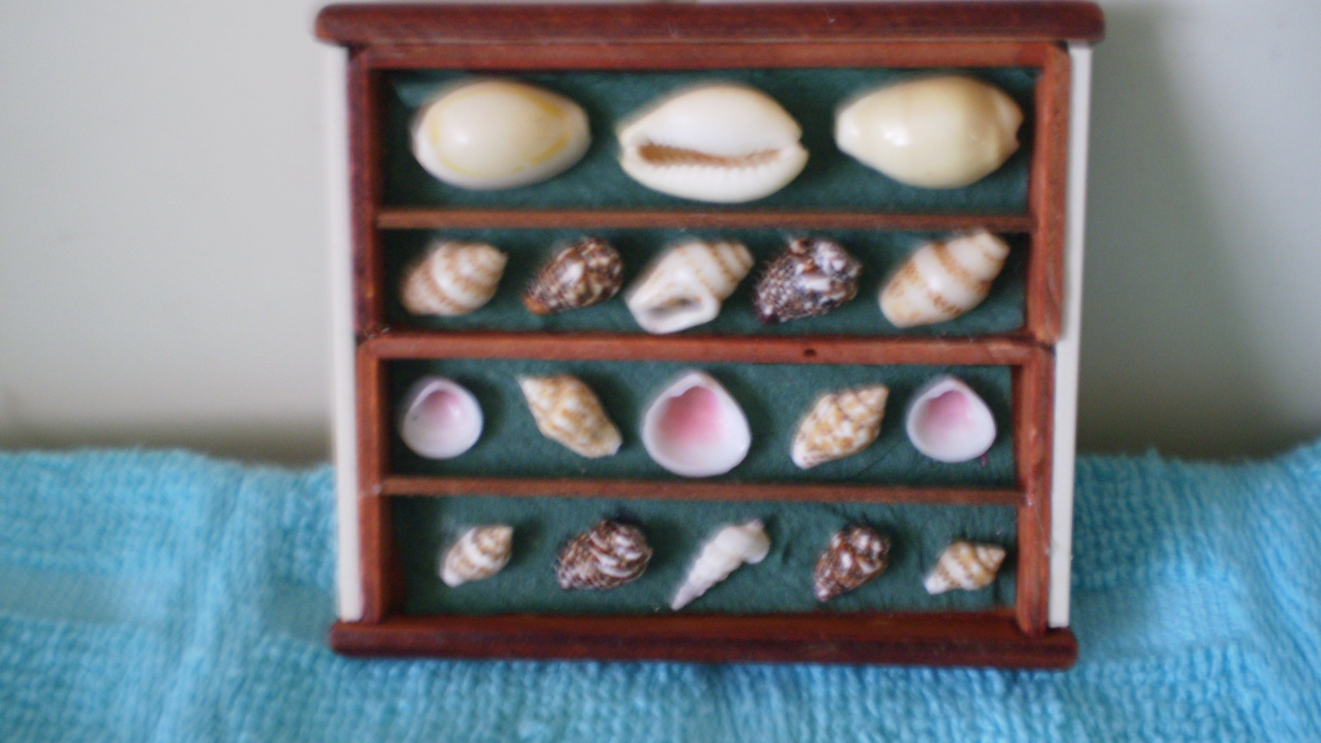 Shell display box from two lonely drawers.