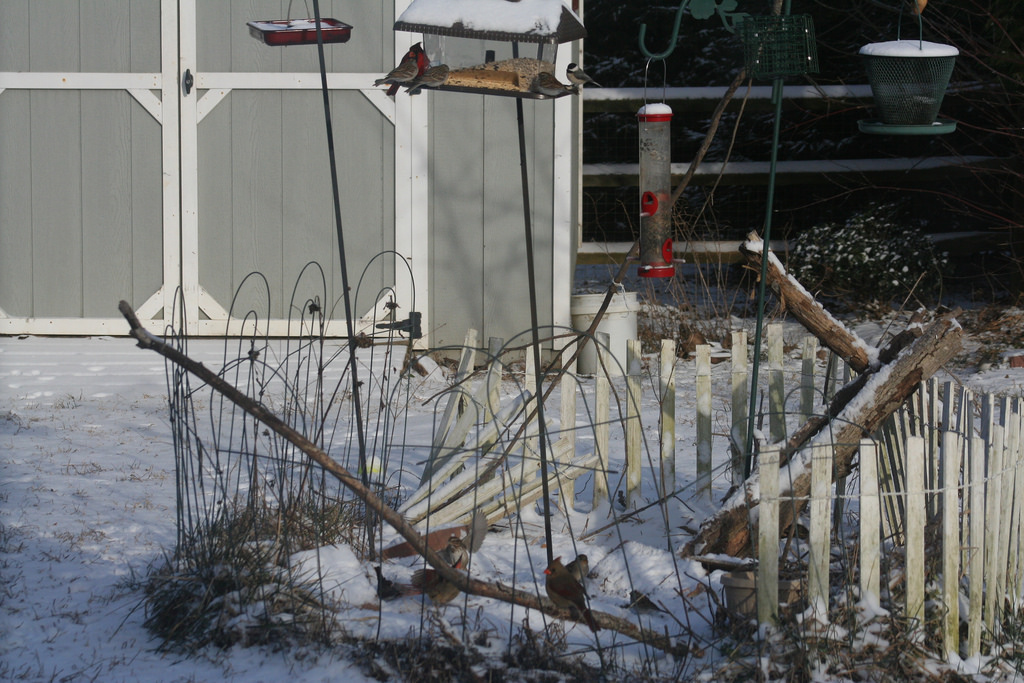 Snowy Feeders