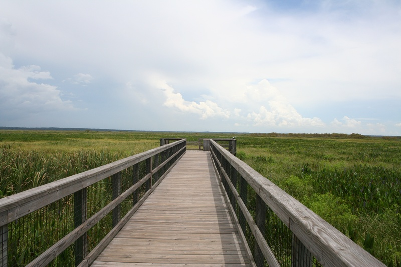 Paynes Prairie State Park