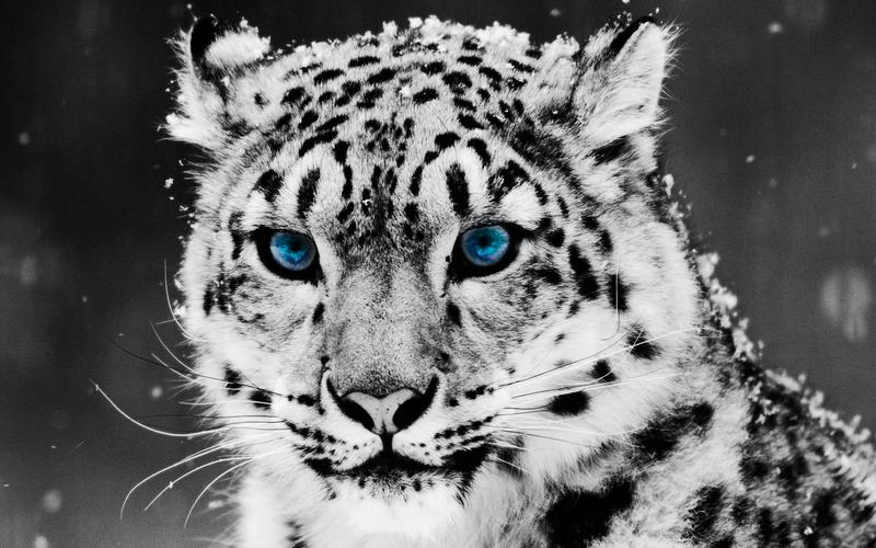 خلفية نمر ابيض خلاب لسطح المكتب - white tiger wallpaper desktop background