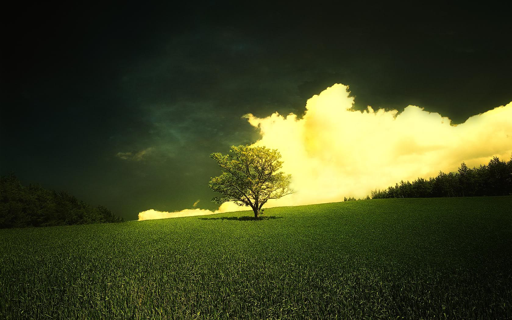صور طبيعية لشجرة في البرية