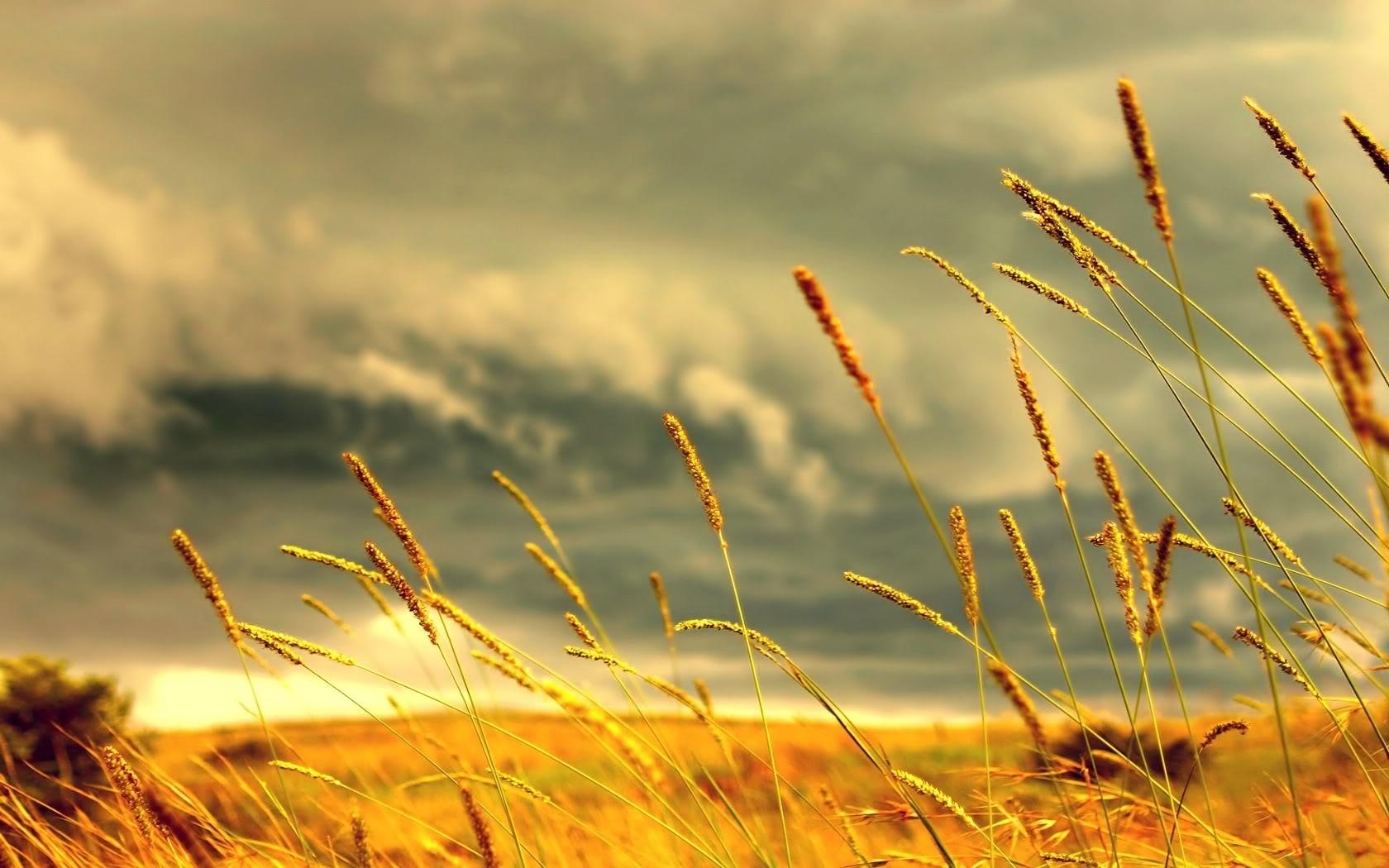 ارض برية طبيعية صحراوية