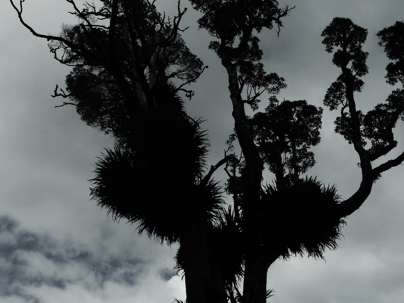 Epiphyte silhouette