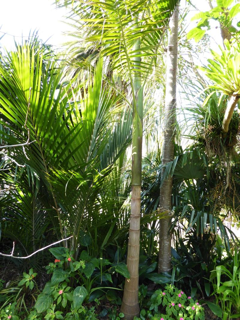 Palms and Kauri