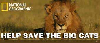 Help Save The Big Cats!