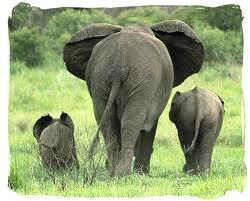Elephant Family!