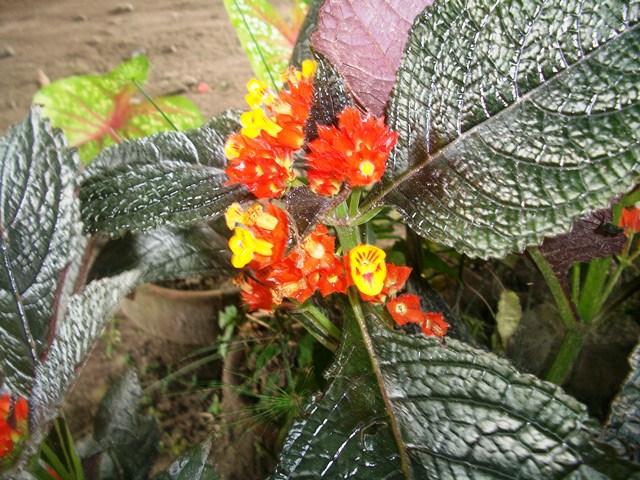 Monte Cielo Flowers