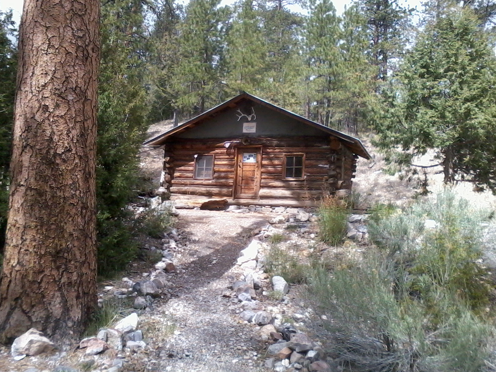 WARDENS CABIN, 8000 FEET