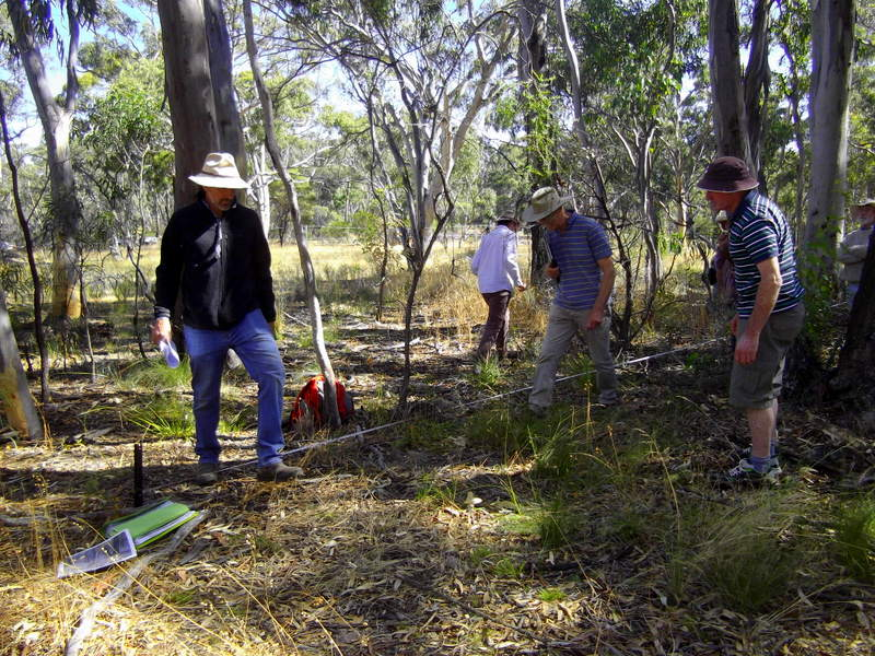Setting the transects