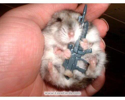 funny animals with guns. funny animals with guns.