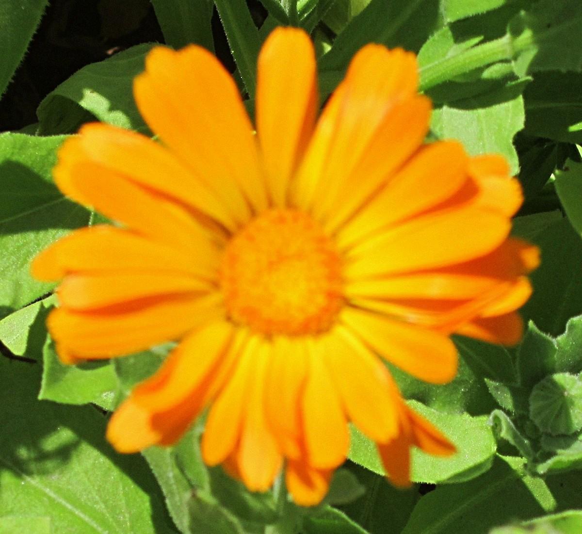 A yellow flower