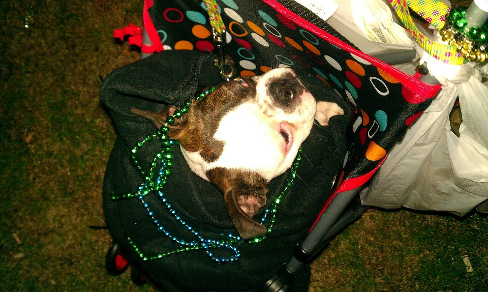 Jakers at the Mardi Gras Parade
