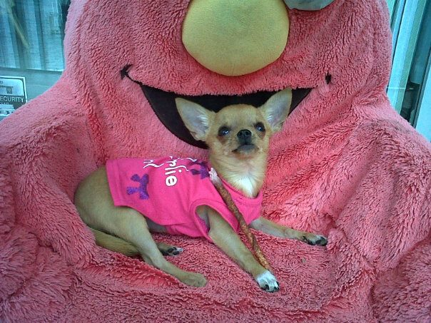 shes the queen of her elmo chair!