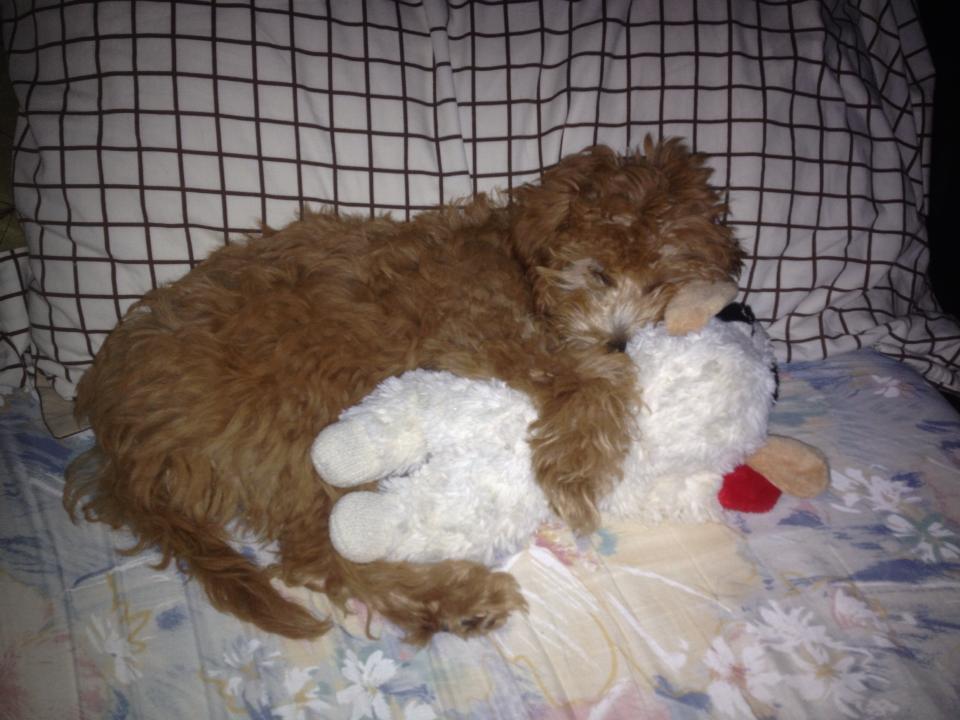 Cuddly Rosie