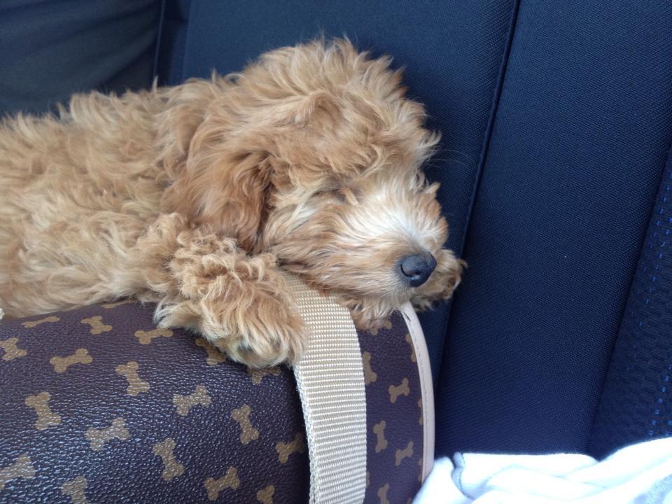 Sleepy Rosie