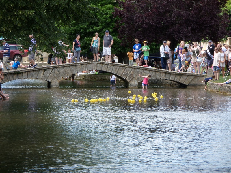Duck race. No Whitecliff winners!