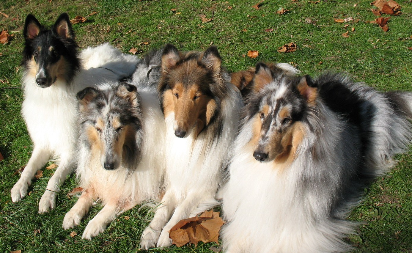 The Voyager Collies