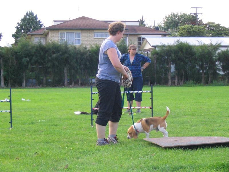 Wobbly beagle