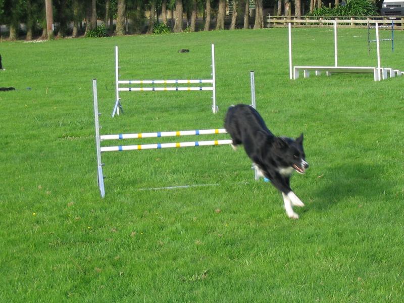 Jig jumps