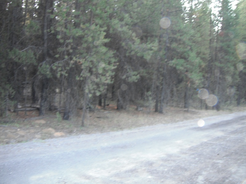 Road into Cow Camp-left side