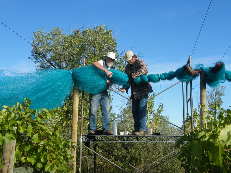 Tying up overhead nets for winter