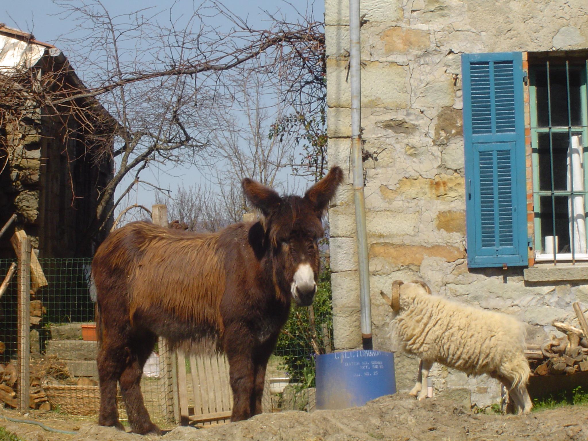 Rosie e Tappo si fanno compagnia