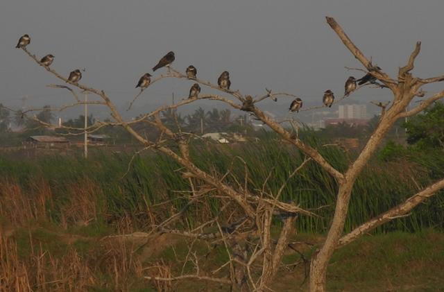 Aves Salamanca