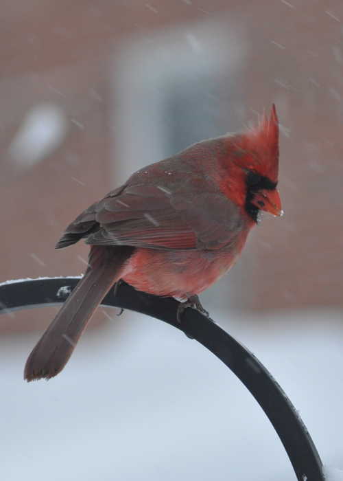 Mr. Cardinal... where's the seed?