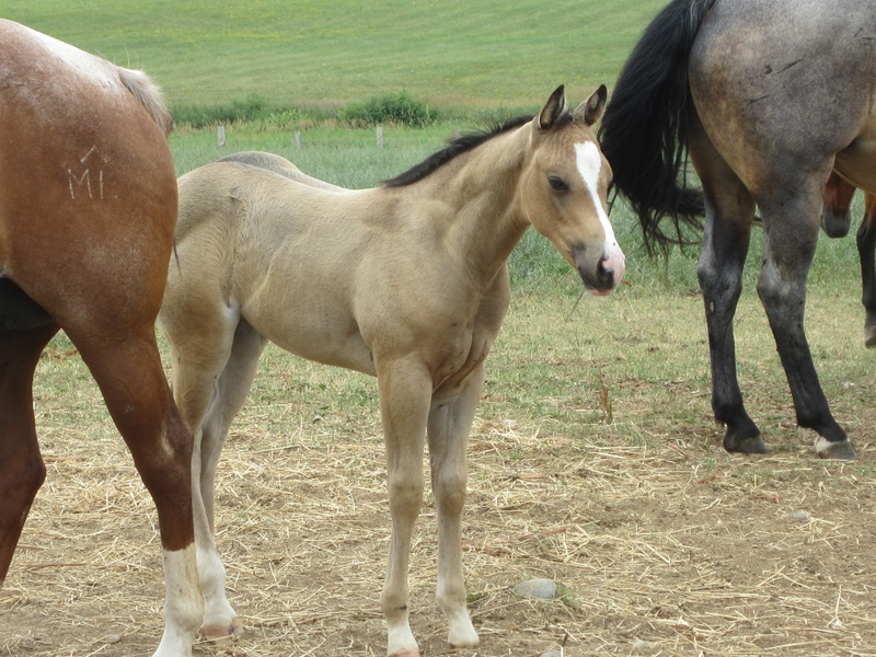 2012 filly-FOR SALE