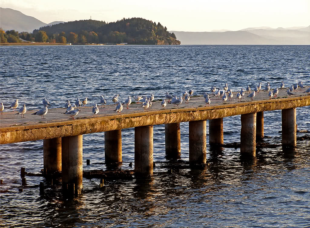 Birds by the Water - Ohrid