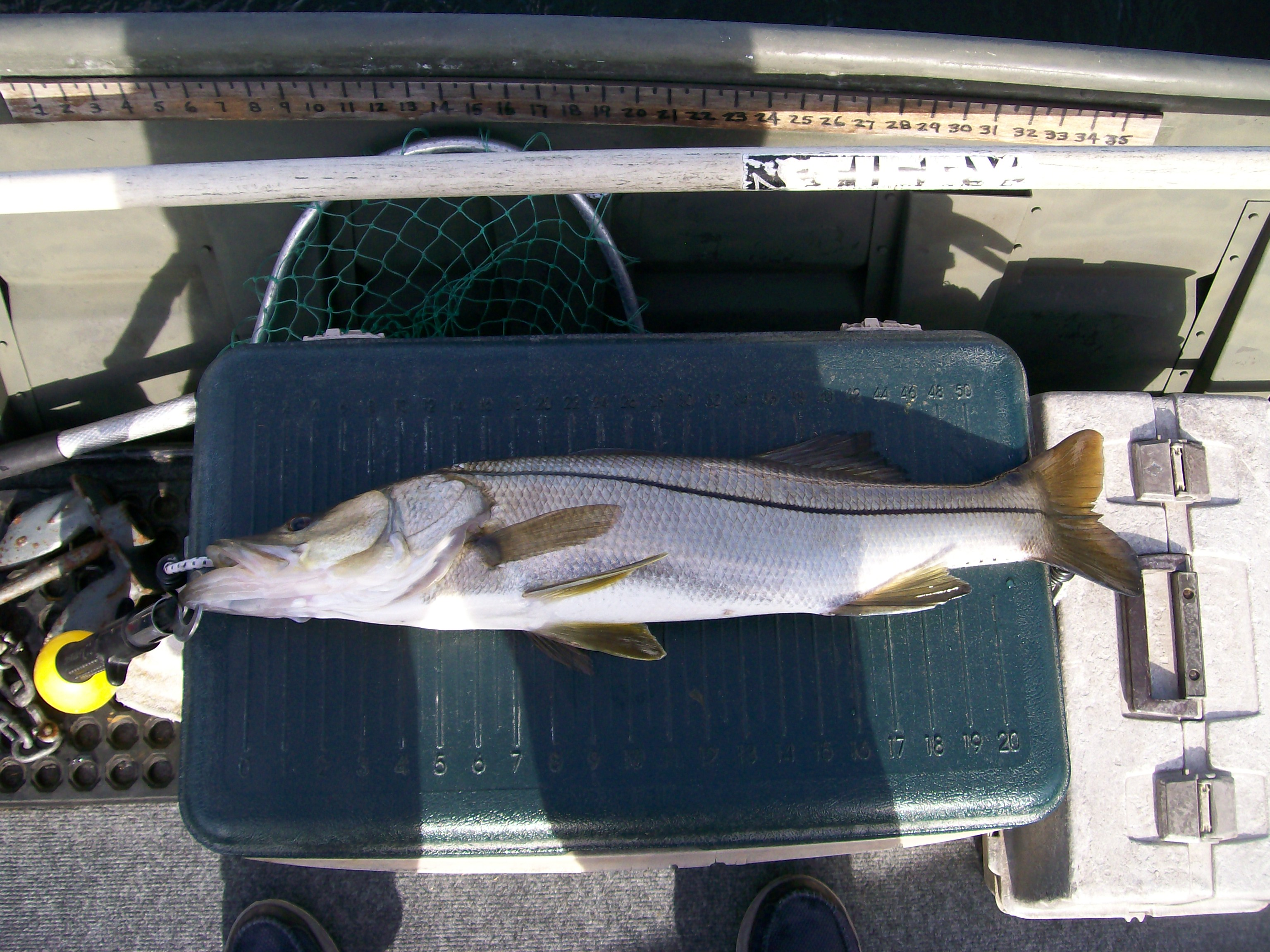 "26"" Snook on the Majic Dine"