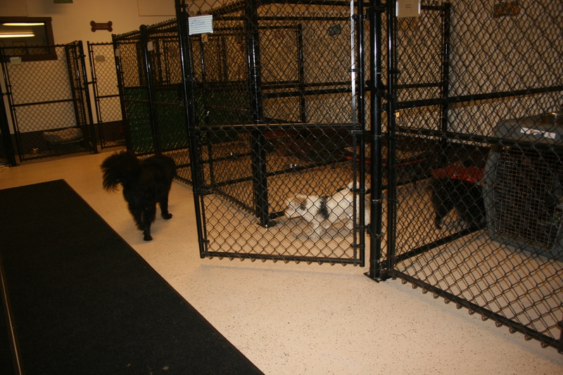 remodeled kennels