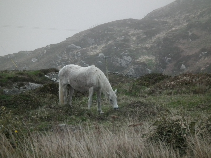 Galway  Campingk