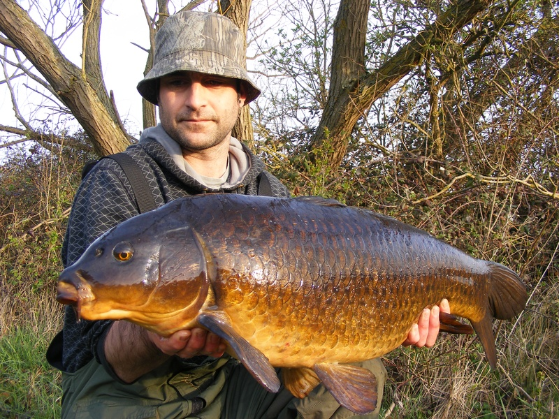 22lb elsons common