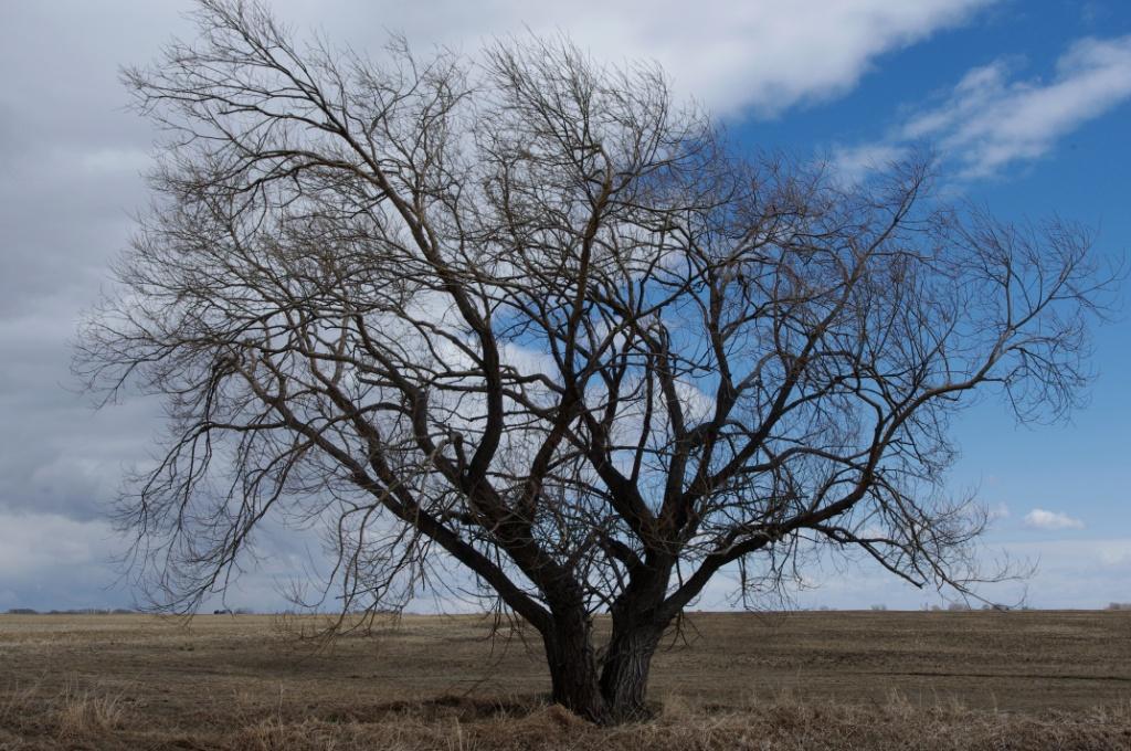 Terminator Tree