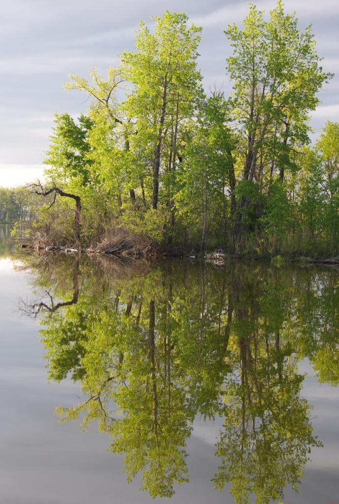 Park Lake Reflections 1