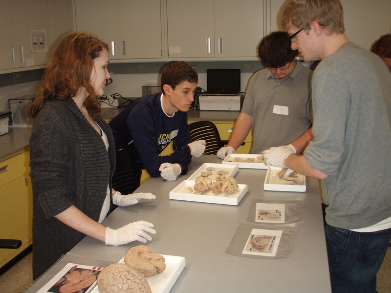 Brain Dissections