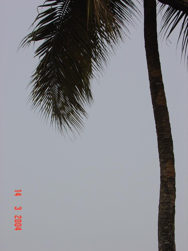 Pic-86
