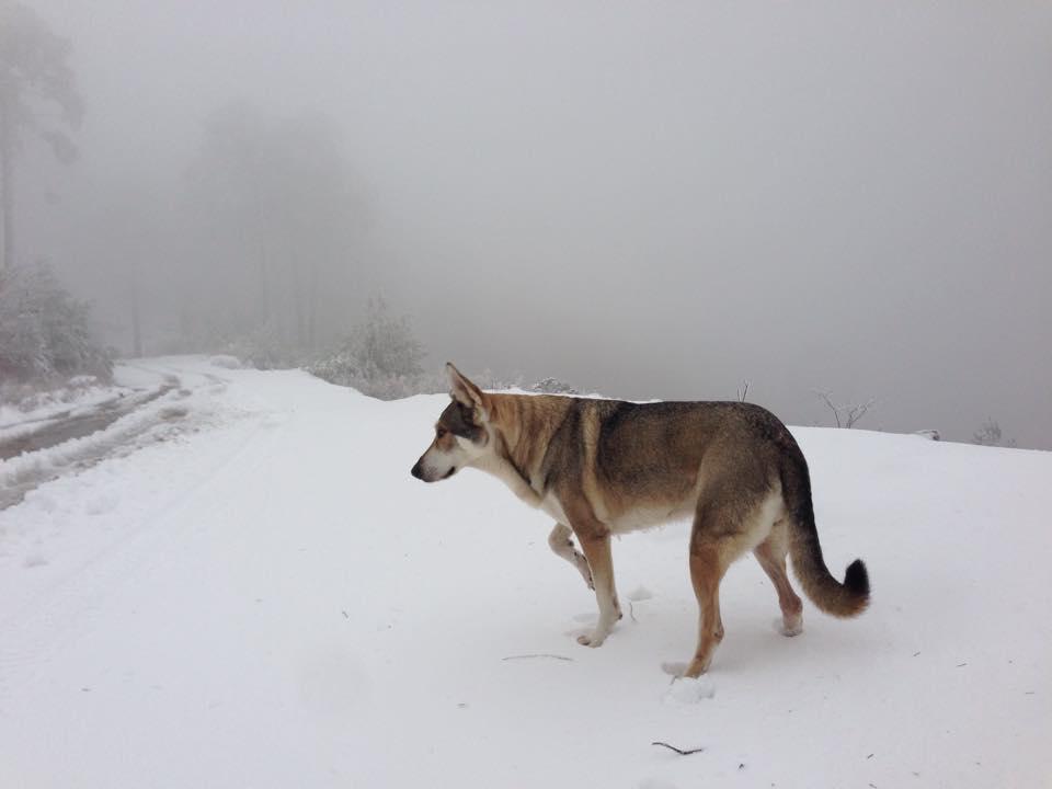 kala in the mountains