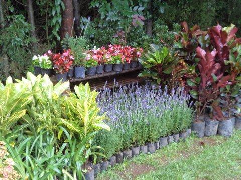 Disenio de jardines for Arreglos para jardin