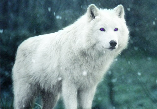 White Wolf With Purple Eyes Chapter 7: I...