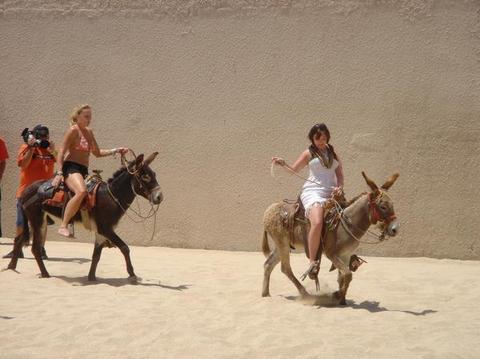 donkeyriders love burros