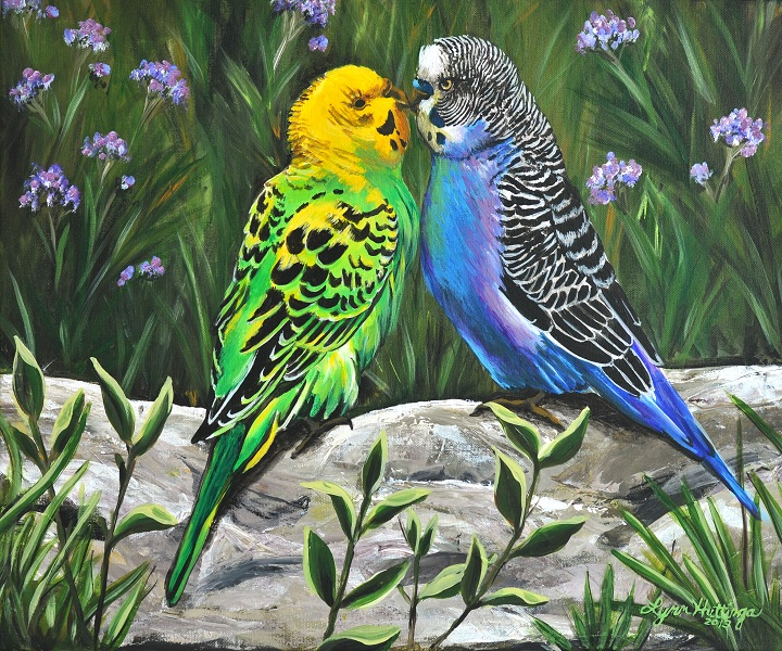 Loving Budgies