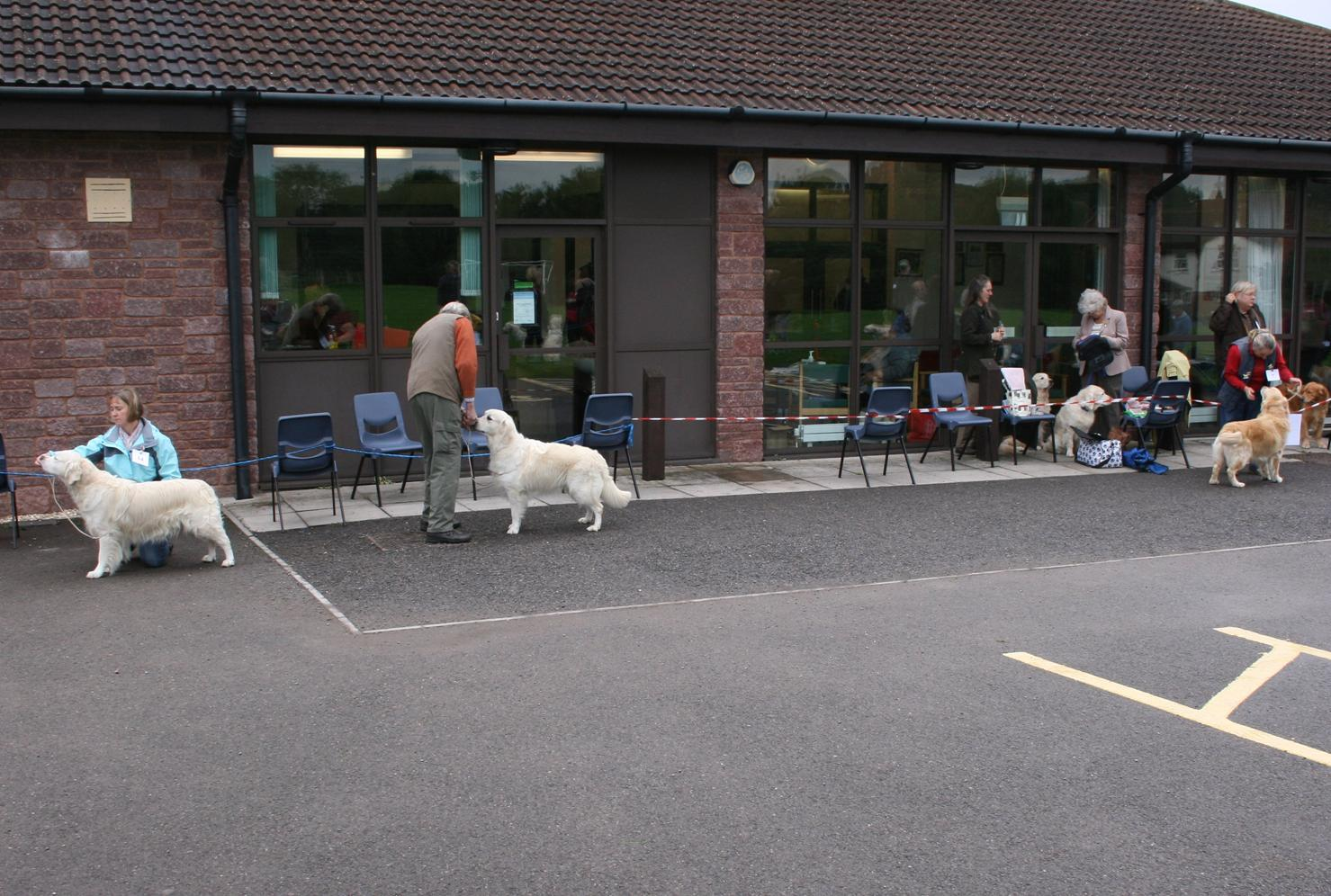 Open Dog Entry