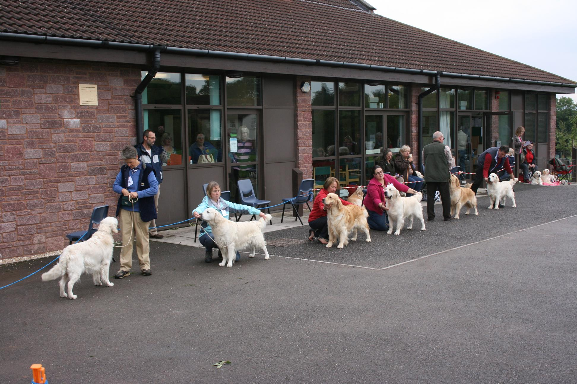 Class Winners for Best Dog