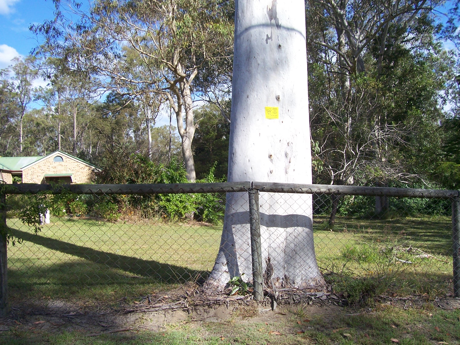 Koala Food Trees - TAGGED May 2012