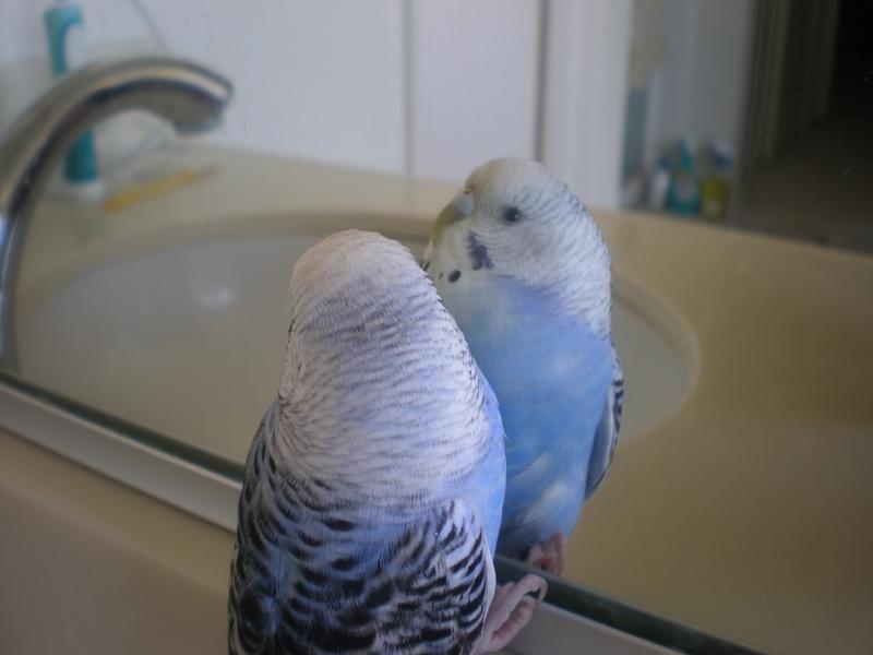Mirror Morning Glory