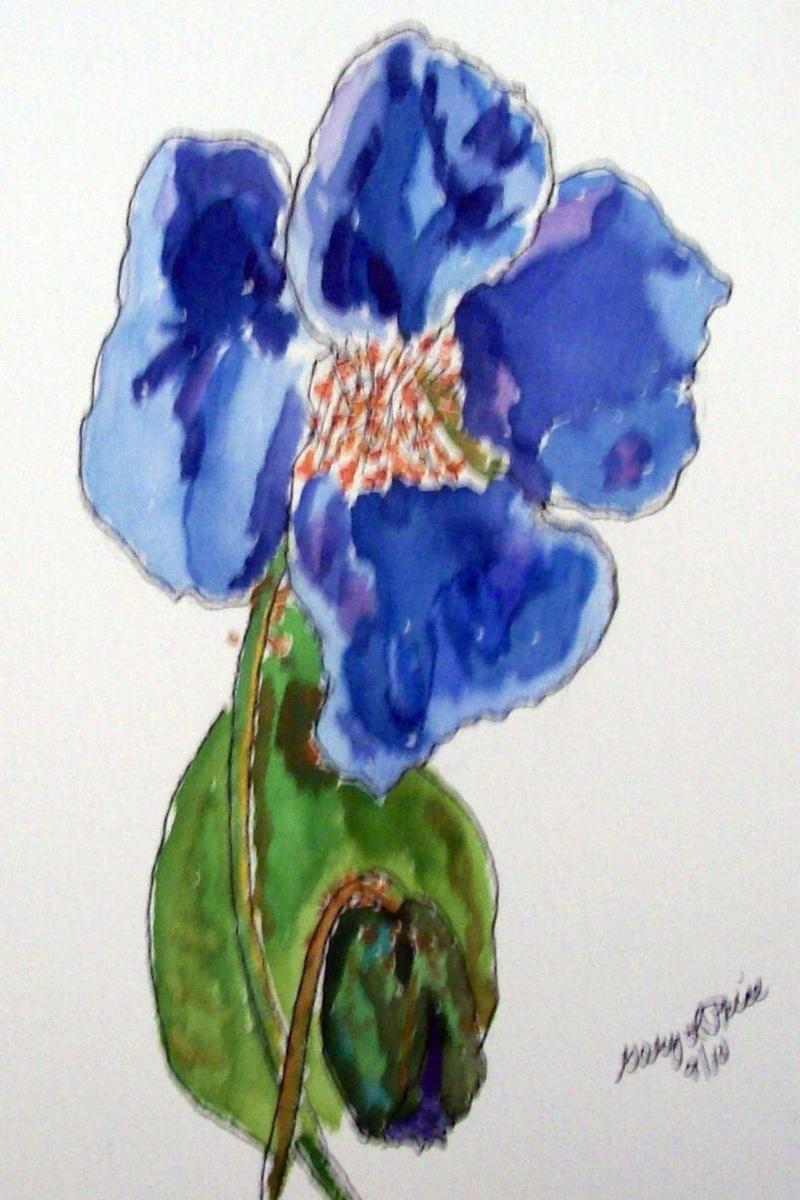 """""""Blue Poppy"""""""